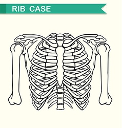 Diagram showing rib case vector