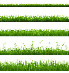 Grass borders big set vector