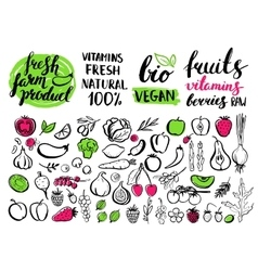 handwritten food elements with rough edges vector image