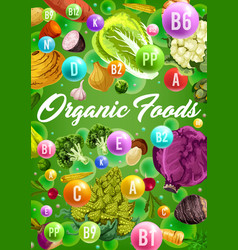 organic vegetarian vegetables and vitamins vector image
