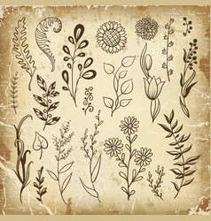 set hand drawn plant herb flowers vector image