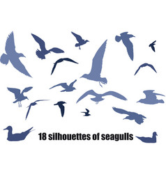 seagulls vector image