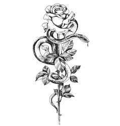 hand drawn twisted snake and rose on high stem vector image