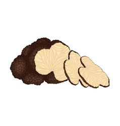 Thin slices truffle subterranean fungus vector