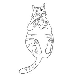 cute cat line art vector image