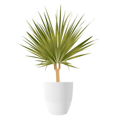 dracaena palm with pot vector image