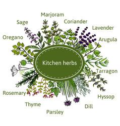 Fresh kitchen herbs vector