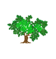 green oak vector image