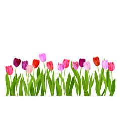 Realistic isolated tulips flowers vector