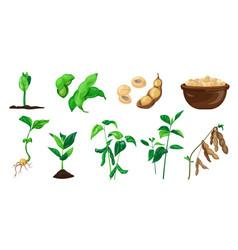 soybean icons set cartoon style vector image