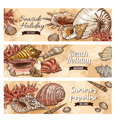 Summer beach shells and sea corals vector