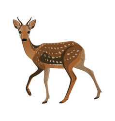 Younf deer with short horns and brown fluffy fur vector