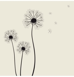 Decoration with dandelion flowers vector image