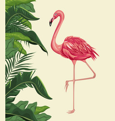 flamingo exotic tropical bird with leaf plam vector image vector image