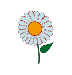 Beautiful single daisy flower isolated on white vector