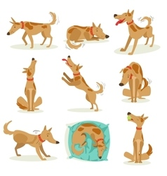 Brown Dog Set Of Normal Activities vector