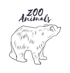 Hand drawn sketch bear Wild animals vector