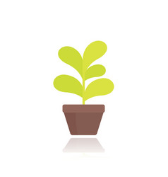 plant in pot in flat style vector image