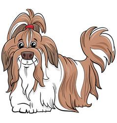 Shih tzu purebred dog cartoon vector