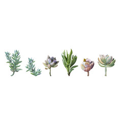 Succulent cactus plant watercolor elements set vector