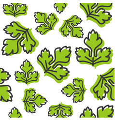 Vegetable seamless pattern coriander or celery vector