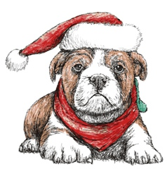 Bulldog with red hat vector