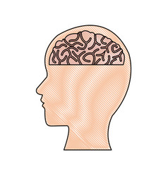 Human head and brain mind concept vector