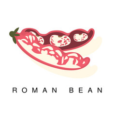 Roman bean pod infographic with vector