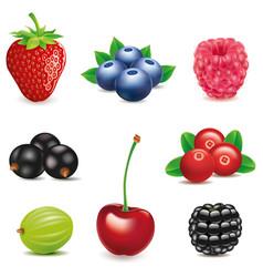 Strawberry-blueberry-raspberry-blackberry-cherry vector