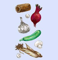digital detailed color vegetable hand drawn vector image