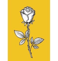 Rose Art for t-shirt design vector image vector image