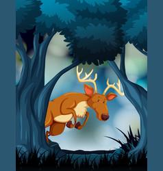 a deer in dark forest vector image
