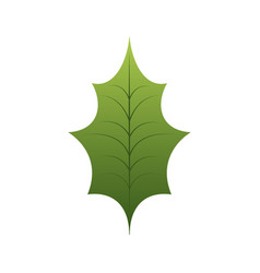christmas leaf holly natural decoration vector image