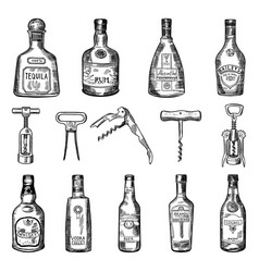 Corkscrew and different wine vector