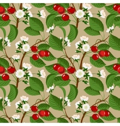 Seamless pattern with cherry berries and blossom vector image