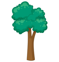 tall tree on white background vector image vector image