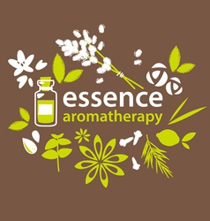 Aromatherapy flowers and plants vector