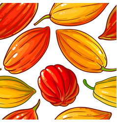 cocoa seeds pattern on white background vector image