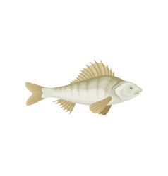 Flat icon small perch freshwater fish vector