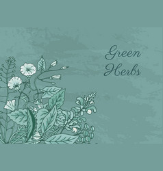 hand drawn medical herbs vector image