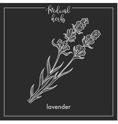 lavender medical herb sketch botanical design icon vector image