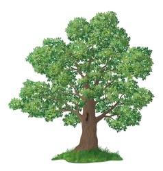 Oak tree and green grass vector image
