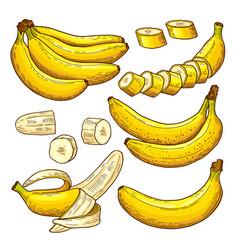 Set of colored bananas tropical symbols vector