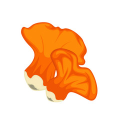 Big and little orange lobster mushrooms isolated vector