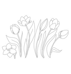 Coloring page collection flowers tulip vector