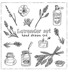 lavender hand drawn doodle set isolated elements vector image