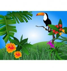 toucan vector image