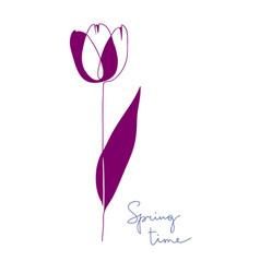 beautiful tulip flower vector image