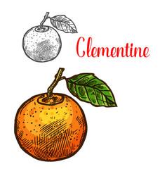 clementine sketch citrus fruit cut icon vector image