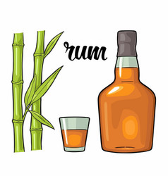 Glass and bottle rum with sugar cane engraving vector
